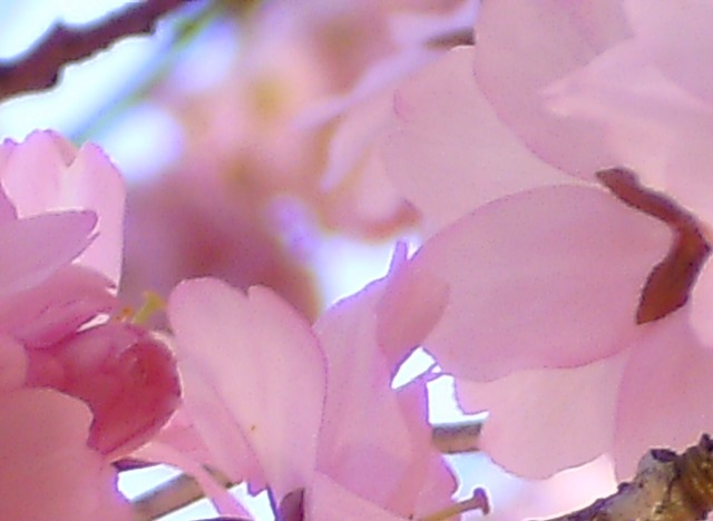 Workshop – Bring Deine Essenz zum Blühen!